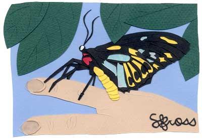 010207-butterfly1.jpg