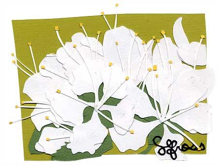 033007-blooms.jpg