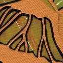 081307-butterfly2-detail.jpg