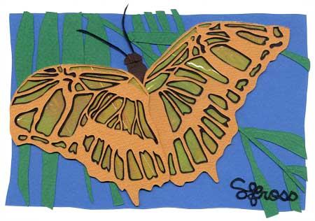 081307-butterfly2.jpg