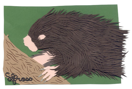 112707-porcupine.jpg
