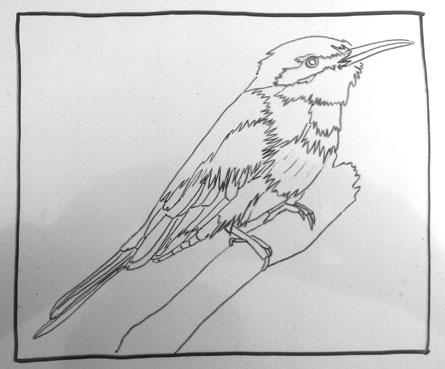 050913-little-bee-eater-drawing