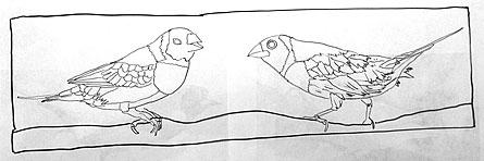 091313-Gouldian-Finch-drawing