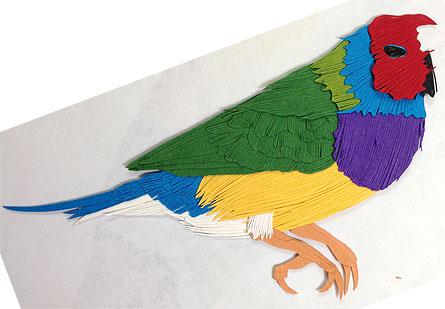 091513-Gouldian-Finch-status