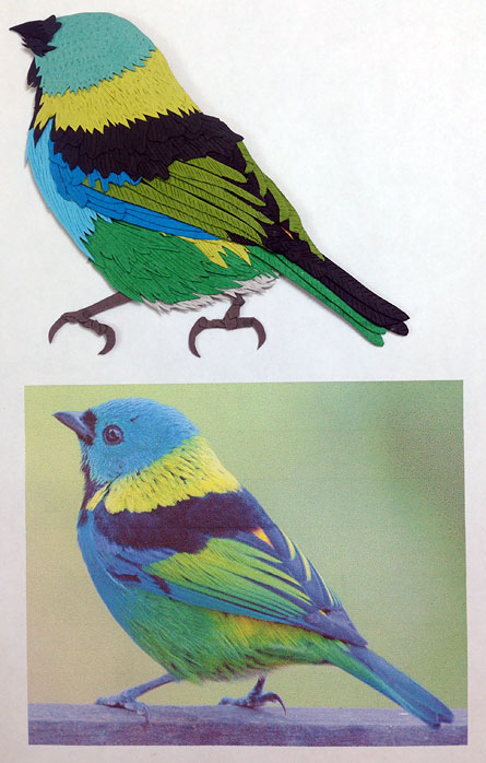 032214-green-headed-tanager-status