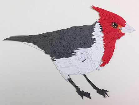 082814-red-crested-cardinal-status