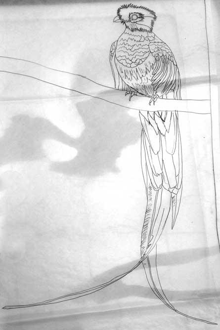 090714-resplendent-quetzal-drawing