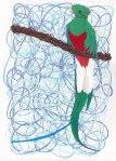 093014-resplendent-quetzal