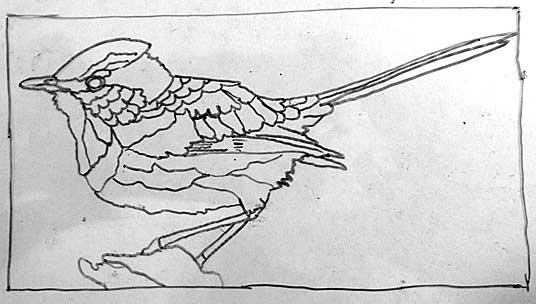 121214-splendid-fairy-wren-drawing