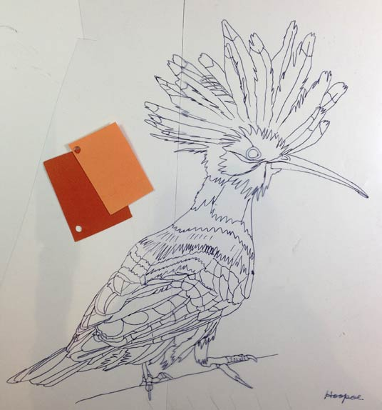 020715-Hoopoe-drawing