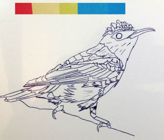020715-RedLeggedHoneyCreeper-drawing