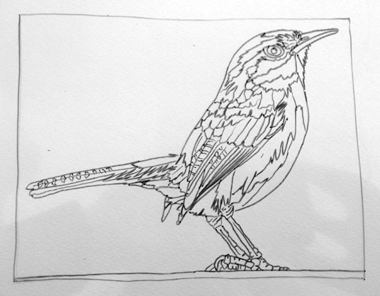031315-carolina-wren-drawing