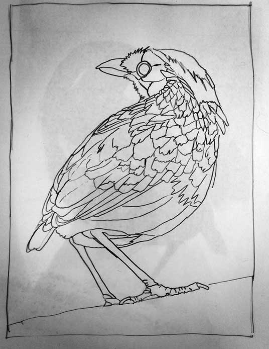 071315-garnet-pitta-drawing