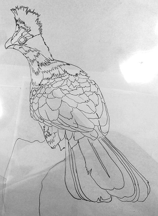 040316-white-crest-turaco-drawing