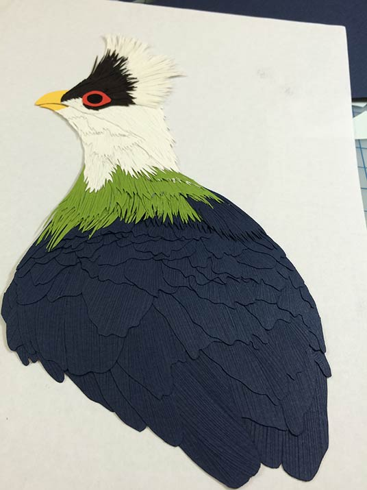 041116-white-crest-turaco-status-angle